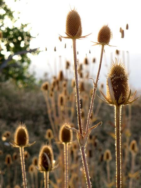 amh FLOWERS (1245).jpg