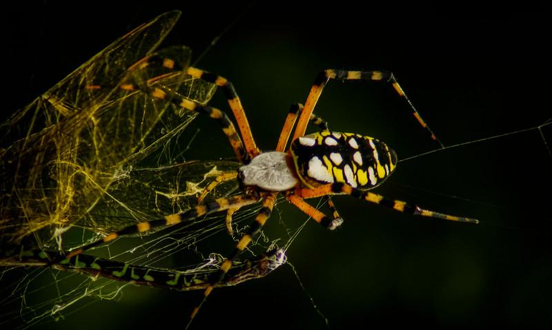 Spiders-Arachnids-014.jpg