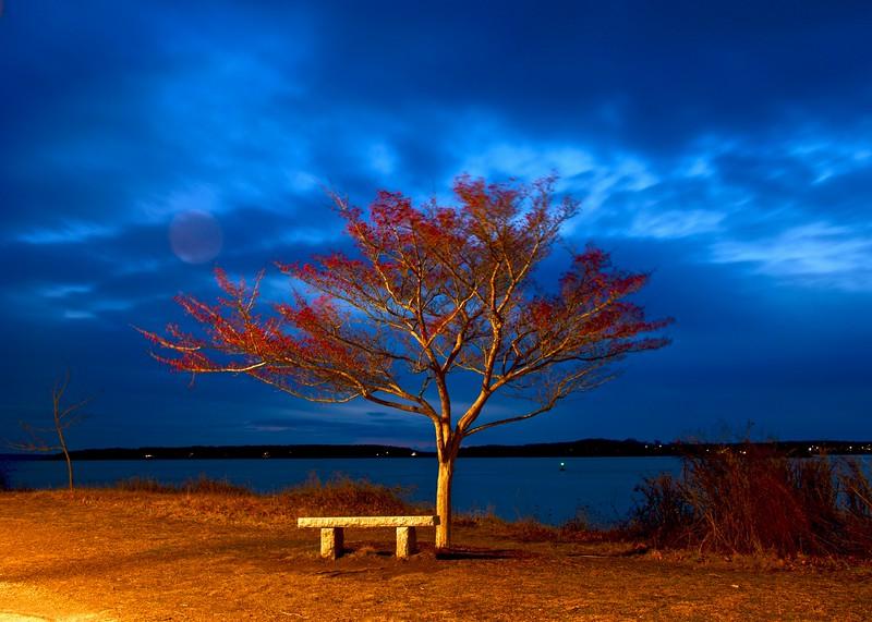 Toms Tree.jpg
