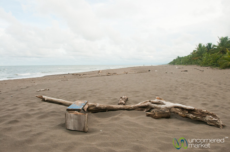 Driftwood on Tortuguero Beach - Costa Rica