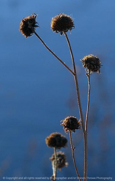 thistle_dawn-bosque_del_apache_nm-02dec06-3168
