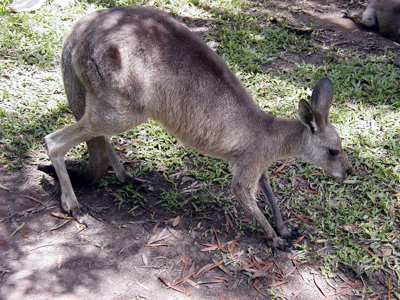 23.  Australia Zoo.JPG