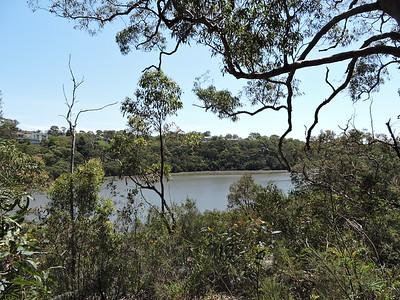 Wetlands at Lime Kiln Bay and Oatley Park, Oatley, NSW - Australia
