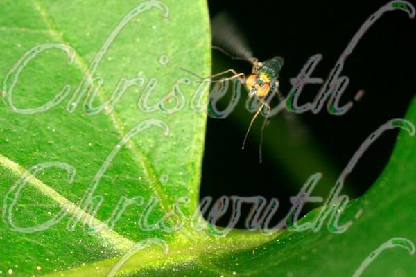 Macrophotography  -  Bugs