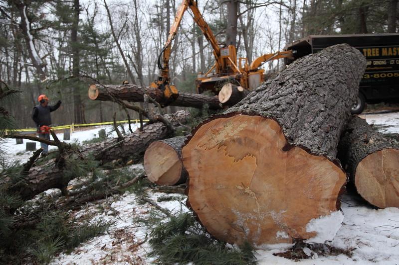 trees_8086
