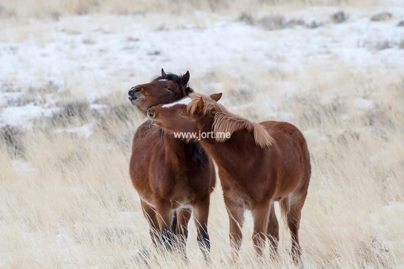 Demanding foal