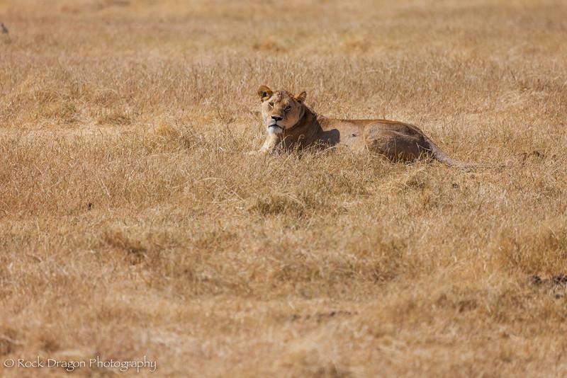Ngorongoro-25.jpg