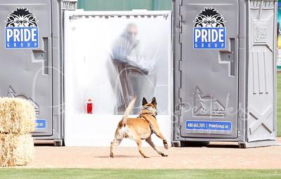 2014 Desert Dog Police K9 Trials (Scottsdale, AZ.)