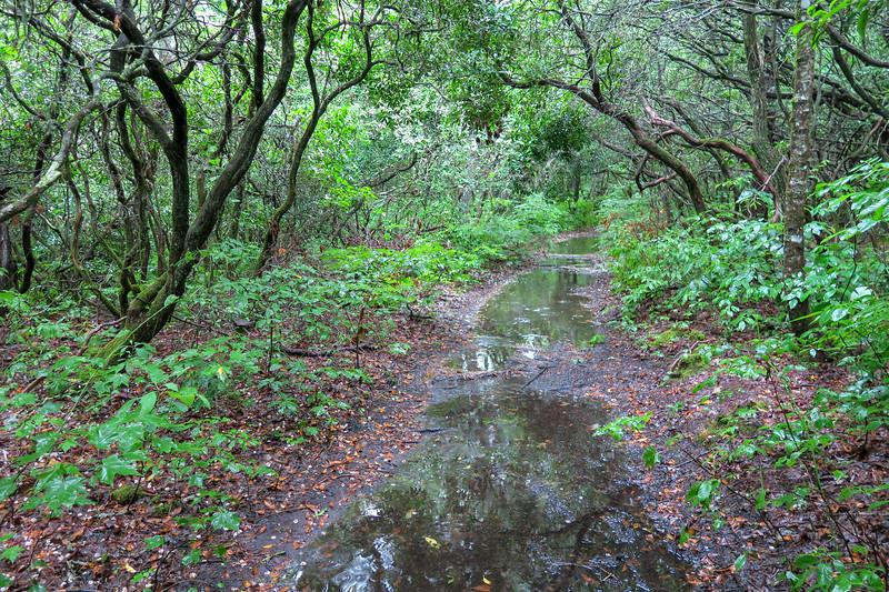 Pink Beds Loop Trail -- 3,250'