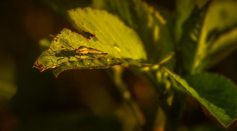 Bugs and Beetles - 131.jpg