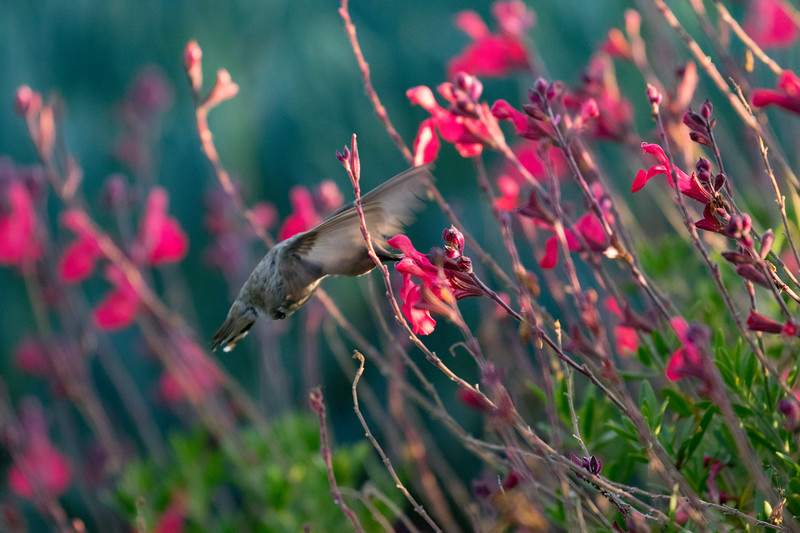 Happy Hummingbird 4.jpg