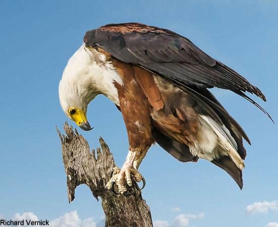 Best Nature Pics - RT Vernick