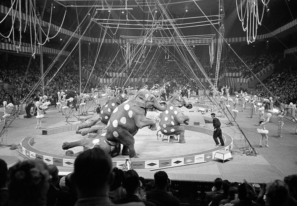 . Elephants and dancers go through their paces in opening stages of first night of the Ringling Brothers and Barnum and Bailey Circus at Madison Square Garden in New York on March 29, 1961. About 7,500 persons turned out for initial performance. (AP Photo/Marty Lederhandler)