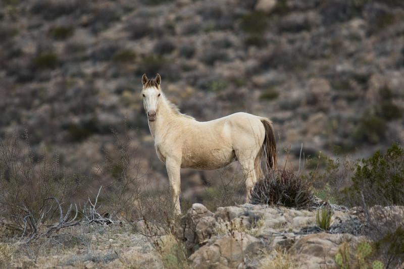 Wild Horse Big Bend NP 2020-1.jpg