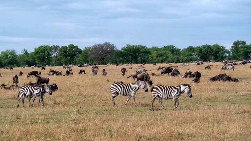 Tanzania-Serengeti-National-Park-Safari-Zebra-02.jpg
