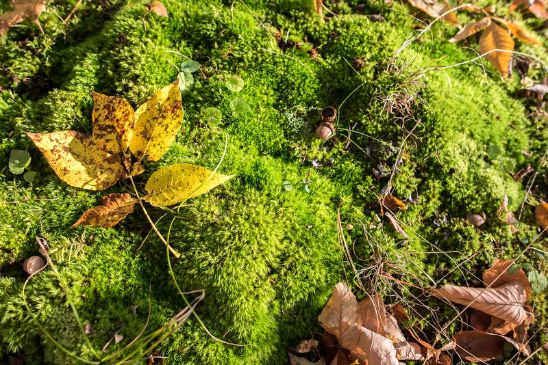 foliage-2014-37.jpg