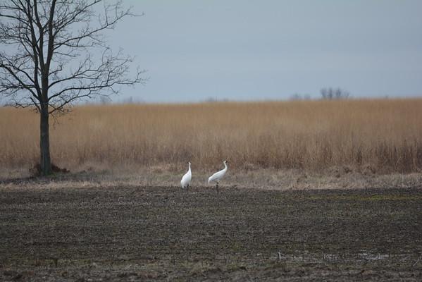 Goose Pond