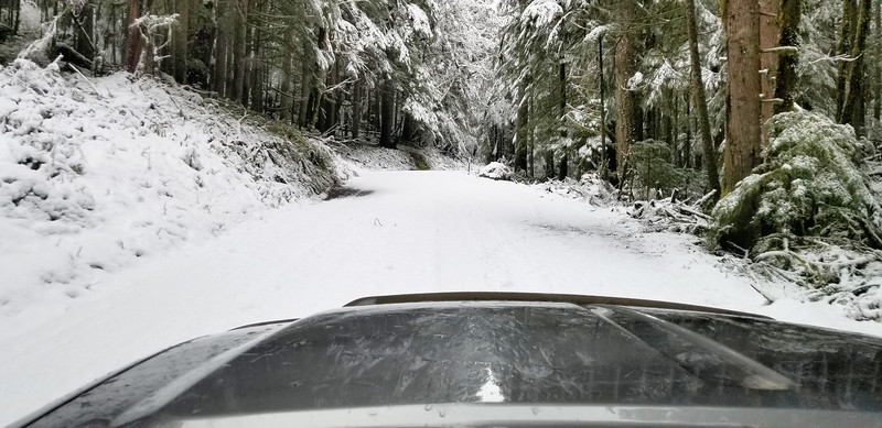 We were the first to drive the pipeline road after the snow - no tracks on the road!