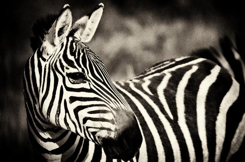 zebra 4283 silver.jpg