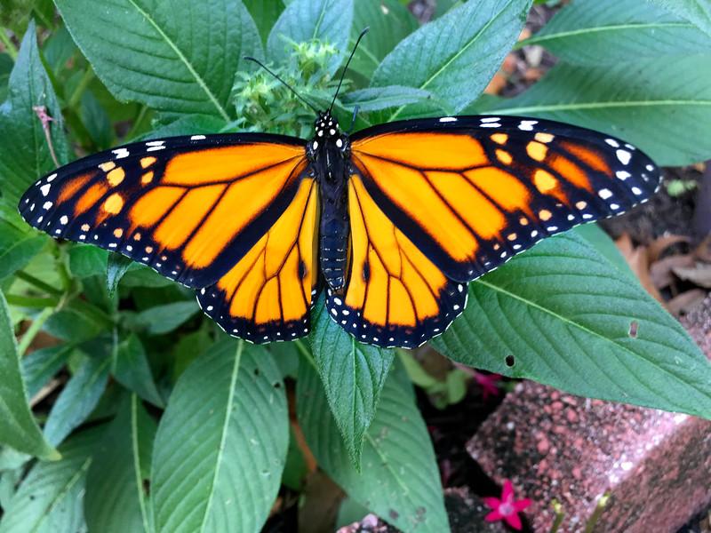 7_12_18 Brand New Butterfly.jpg