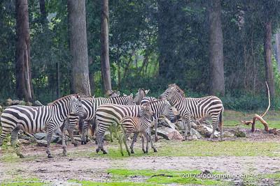 Dierenpark Arnhem Burgers Zoo