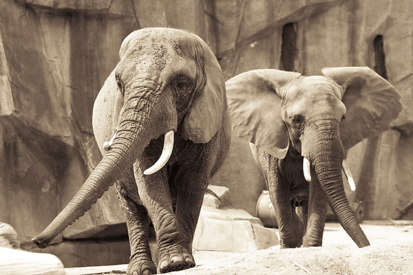 Milwaukee public zoo