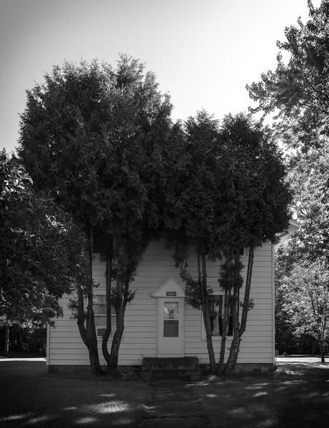 Overgrowth [Aikin, MN]