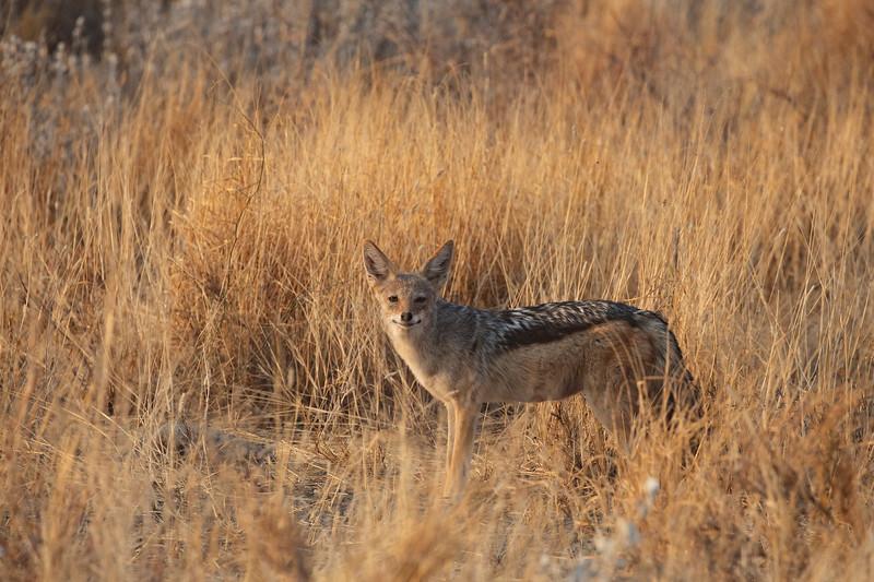 Namibia 69A7104.jpg