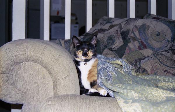 2004 12 15 - Cats