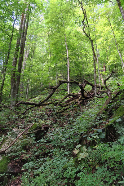 Hyatt Ridge Trail - 4,070'