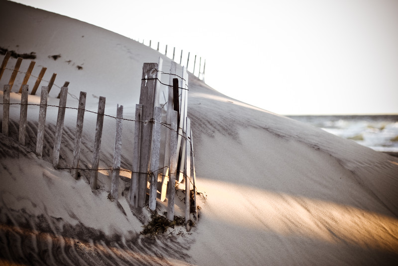 Sand Dunes and Wood