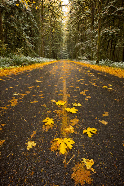 leaves in road.jpg