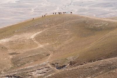 Judean Desert 2017