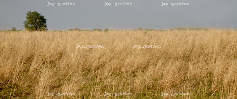 20080505-Landscape.jpg