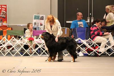 Veteran Dog 7-9yrs 2015 BMDCA Natl. Specialty