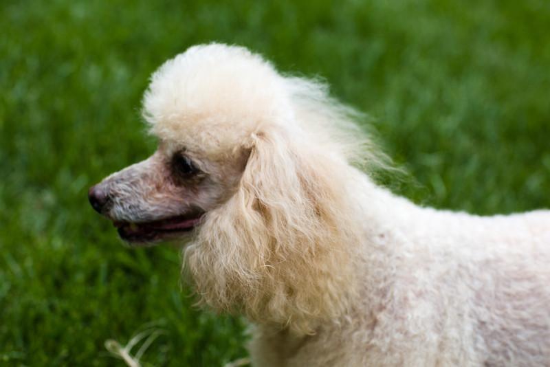 opal mike dogs (1 of 1)-104.jpg