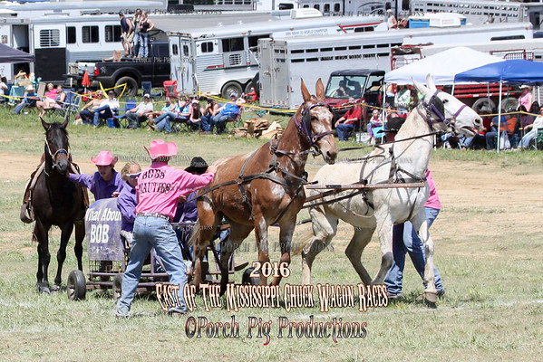 2016 East of The Mississippi Chuckwagon Races,  Saturday Big Mule