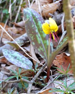 Caesar Creek Wildflowers