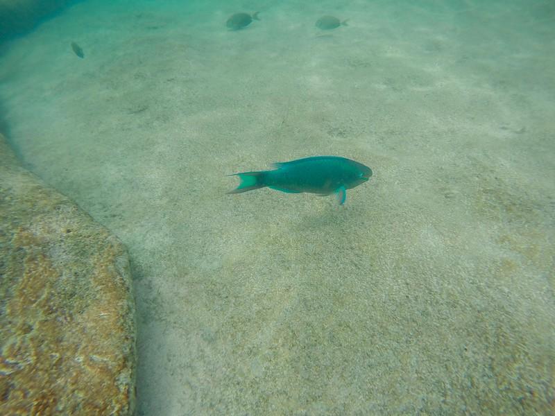 Bermuda-28.jpg