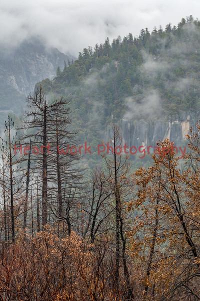 Rim Fire 2013-14 - Yosemite NP & Groveland CA