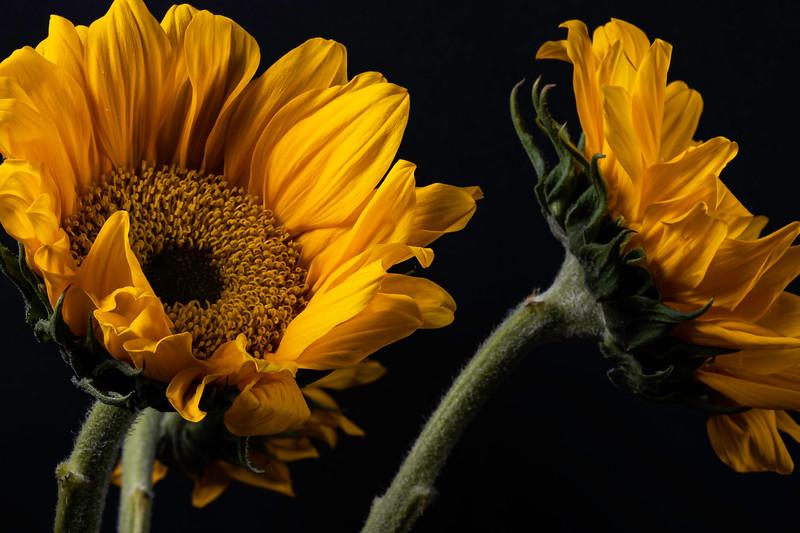 Botanicals-009.jpg