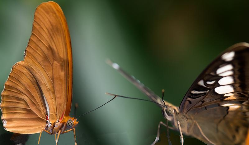 A Butterfly Conversation.jpg