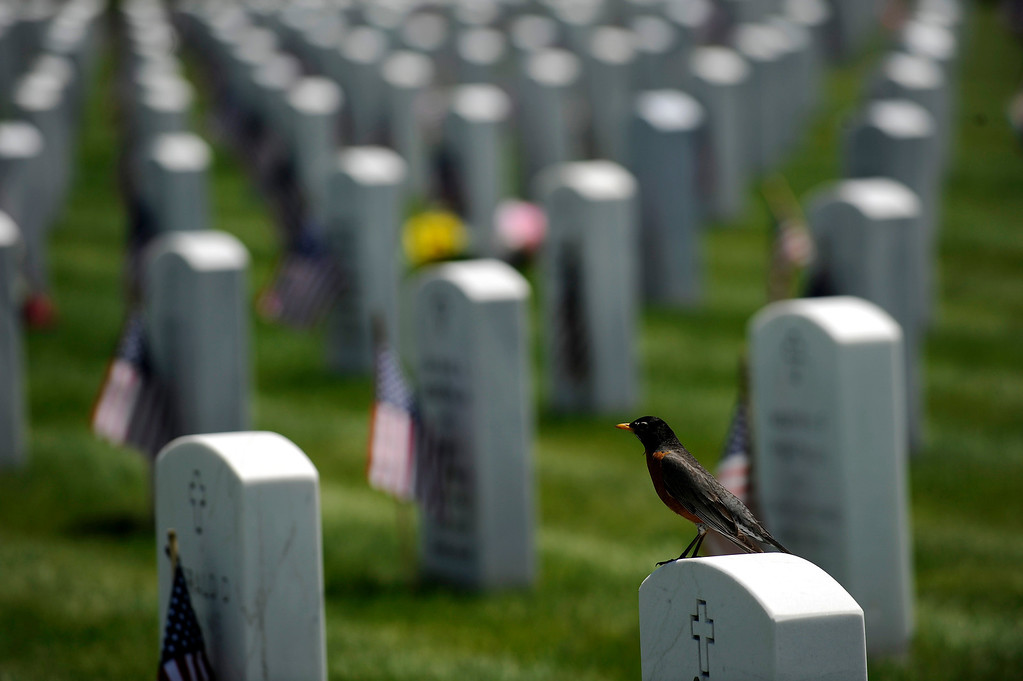 . A robin perches on a headstone during a Memorial Day ceremony at Fort Logan Cemetery in Denver, Colorado on May 26, 2014. (Photo by Seth McConnell/The Denver Post)