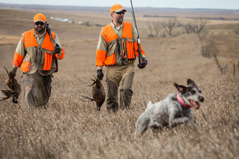 Uplanding Hunting North Dakota