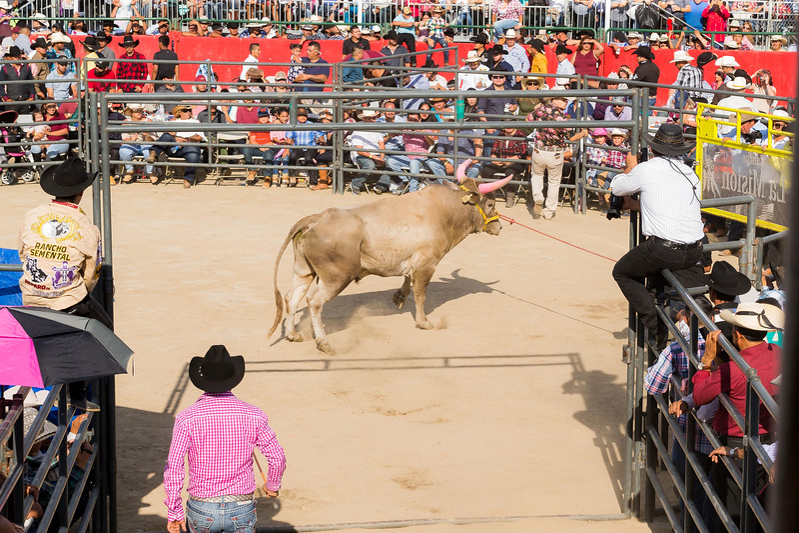 Rodeo-11PS.jpg