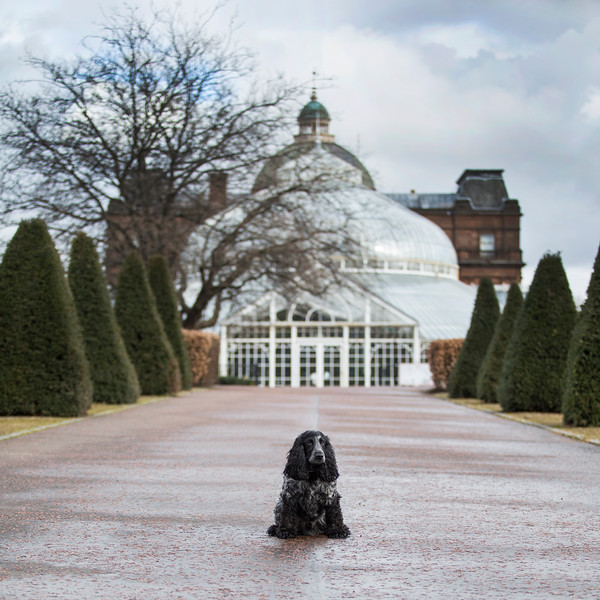 spaniel in front of peoples palace