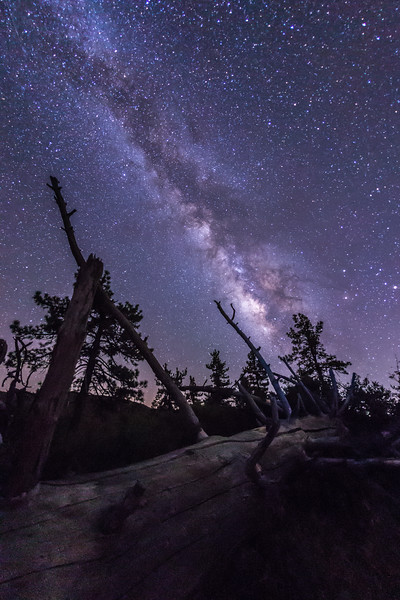 Milky Way and Fallen Tree - take 2.