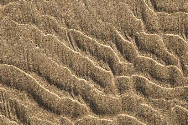 Sand, dirt, bark and rocks