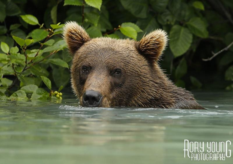 Bear-2.jpg