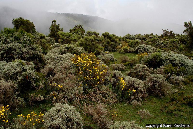Bale Mountains_32.JPG